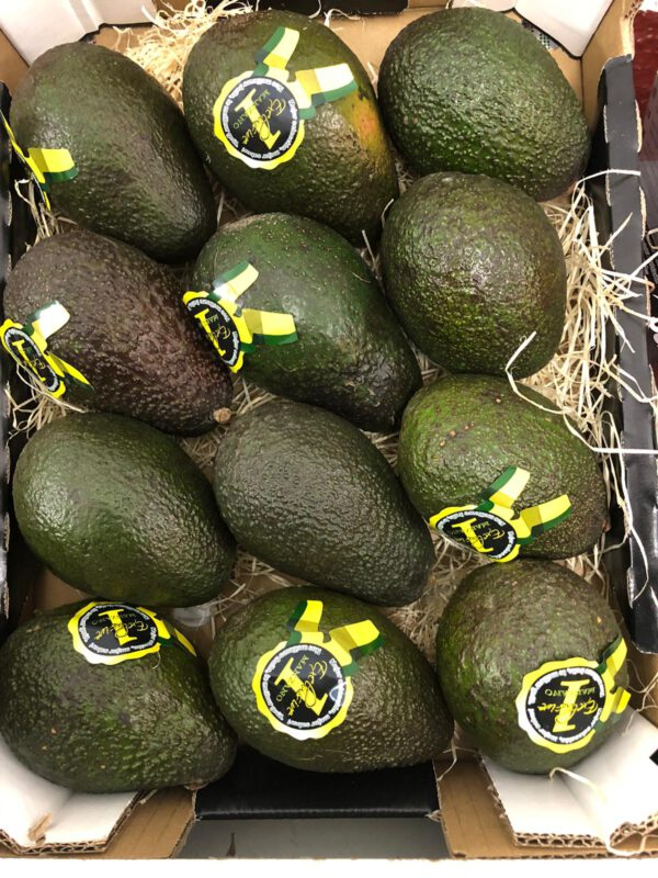 aguacate - producto