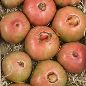 tomate rosa - producto