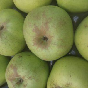 manzana reineta - producto - verduleria online